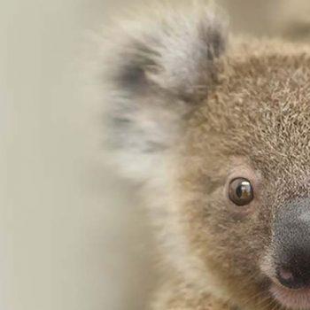 Koala Symposium