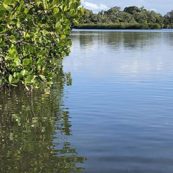 Noosa River Biodiversity
