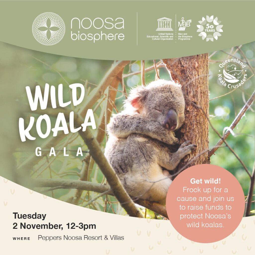 noosa wild koala gala 2021